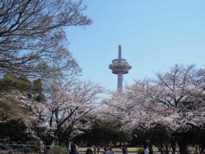 時計塔と桜